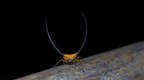 Aranha bonita na terra, aranha de salto em Tailândia Imagem de Stock