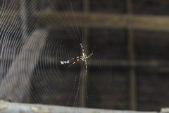 Aranha com a Web Foto de Stock Royalty Free