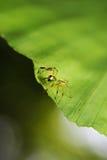 Aranha da casa Fotos de Stock