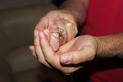 Aranha da casa imagem de stock