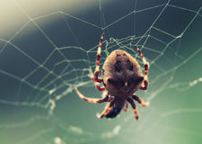 Aranha de Brown na Web no fim do foco seletivo acima Fotografia de Stock Royalty Free