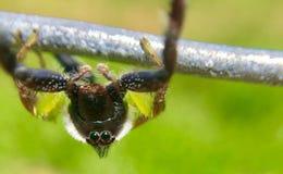 Aranha de cabeça para baixo em um rancho Fotos de Stock