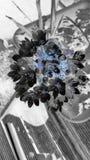 Aranha de Luminessent Imagem de Stock