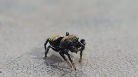 Aranha de salto que estuda uma superfície molhada vídeos de arquivo
