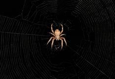 Aranha de tecelagem da esfera que senta-se em sua Web Imagens de Stock