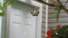 Aranha do caranguejo Fotografia de Stock Royalty Free