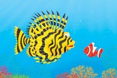 Aranha-do-mar e anemonefish Imagens de Stock Royalty Free