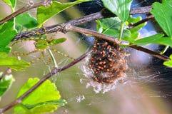 Aranha e bebês Imagens de Stock