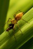 Aranha e lagarta Fotografia de Stock Royalty Free