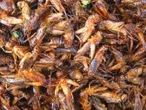 Insetos fritados Foto de Stock Royalty Free