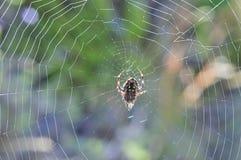 Aranha e seu Web Imagem de Stock