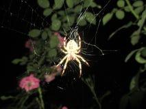 Aranha e sua rede fotos de stock