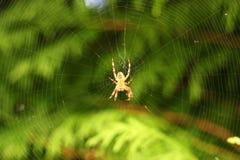 Aranha e teia de aranha no fundo natural verde Fotografia de Stock