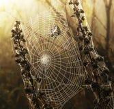 Aranha e um Web Foto de Stock Royalty Free