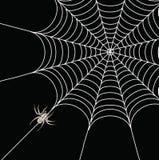 Aranha e um Web ilustração stock
