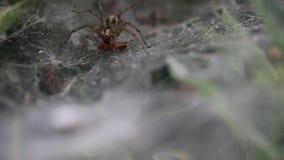 Aranha e uma refeição vídeos de arquivo