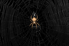 Aranha e Web Foto de Stock Royalty Free