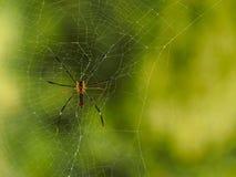 Aranha e Web Imagem de Stock
