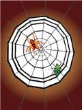 aranha e Web de aranha Ilustração do Vetor