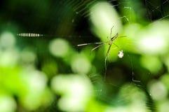 Aranha e Web de aranha na floresta Imagens de Stock