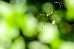 Aranha e Web de aranha na floresta Fotografia de Stock Royalty Free