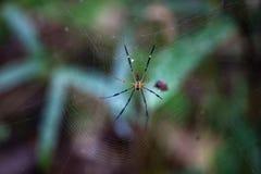 Aranha e Web de aranha contra um fundo verde na natureza da BO imagens de stock
