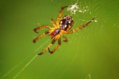 Aranha em um close-up verde do fundo Foto de Stock Royalty Free