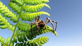 Aranha em um ramo Fotos de Stock Royalty Free