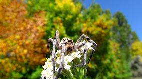 Aranha em um ramo Foto de Stock Royalty Free