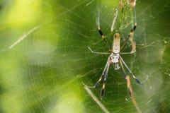 Aranha em um Web Fotos de Stock Royalty Free
