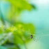 Aranha em um Web Fotografia de Stock Royalty Free