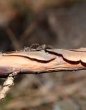 Aranha em uma árvore em um dia de mola quente Fotos de Stock Royalty Free