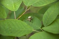 Aranha em uma folha Foto de Stock