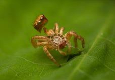A aranha faz a muda fotografia de stock