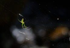 Uma aranha verde Fotografia de Stock