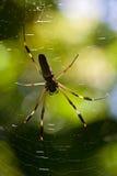 Aranha grande em um Web Fotografia de Stock Royalty Free