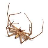 Aranha inoperante Fotografia de Stock Royalty Free