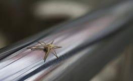 Aranha minúscula imagens de stock