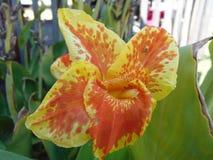 Aranha minúscula na flor imagem de stock royalty free