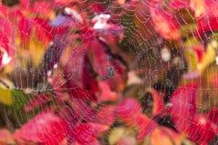 Aranha molhada no fundo outonal Foto de Stock Royalty Free