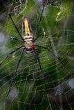Aranha na aranha fotografia de stock