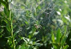 Aranha na floresta Imagem de Stock Royalty Free