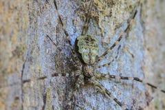 Aranha na floresta Fotografia de Stock