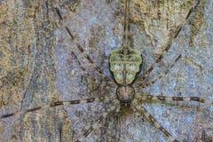 Aranha na floresta Imagens de Stock