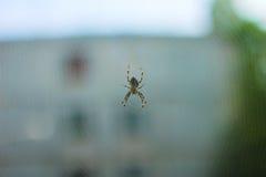 Aranha na floresta Fotografia de Stock Royalty Free