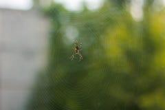 Aranha na floresta Imagem de Stock