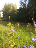 Aranha na floresta da manhã do verão imagem de stock royalty free