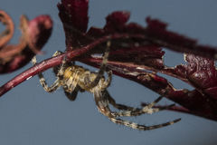 Aranha na folha imagem de stock