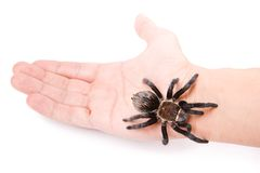Aranha na mão Imagens de Stock