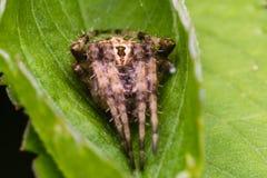 Aranha na natureza fotografia de stock royalty free